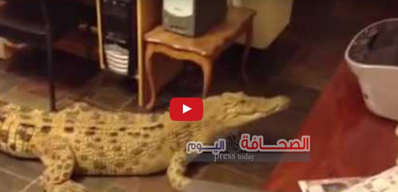 شاهد : أسترالية تربى تمساح ضخم بمنزلها