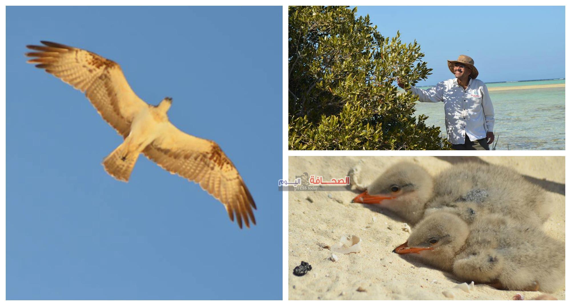 الفنان أيمن برايز ..فى  وادى الجمال أكبر محمية لسياحة الطيور المهاجرة