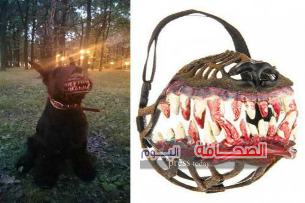 بالصور :كمامات مخيفة تحول الكلب الى ذئب