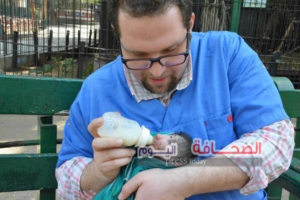 بالصور .. مولود جديد لقرد النيل الأزرق بحديقة حيوان الجيزة