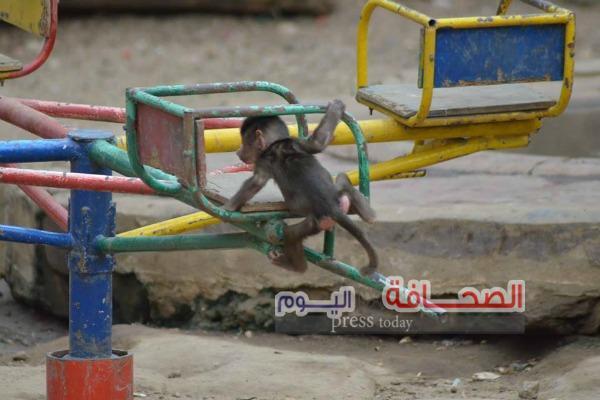 بالصور .. مراجيح وألعاب للقردة الصغيرة بجبلاية القرود بحديقة حيوان الجيزة