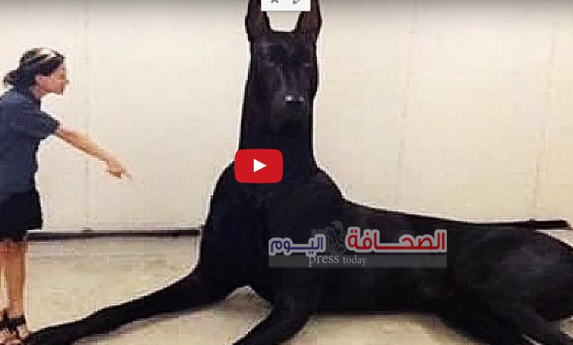 تعرف على :أكبر 10 كلاب بالعالم