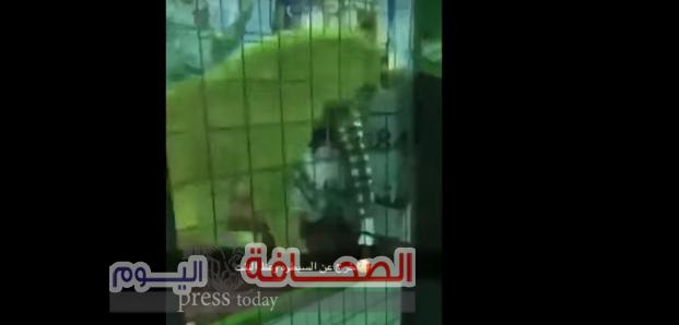 بالفيديو : أسد يهاجم طفلة بالسعودية
