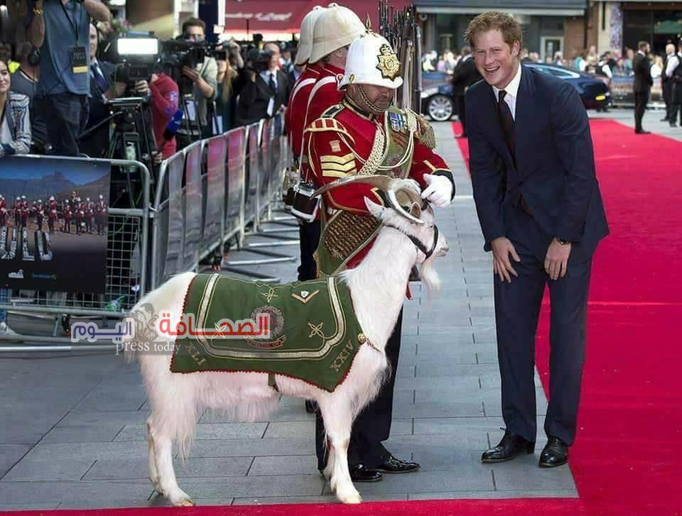بالصور :تيس الملكة اليزابيث