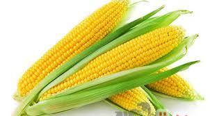 الصناعات الغذائية: انخفاض أسعار القمح عالميا وارتفاع الشعير والذرة الصفراء