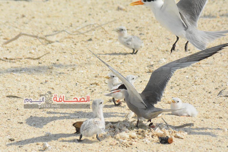 بالصور .. وصول 5 ألاف طائر نادر من أوربا لمرسى علم