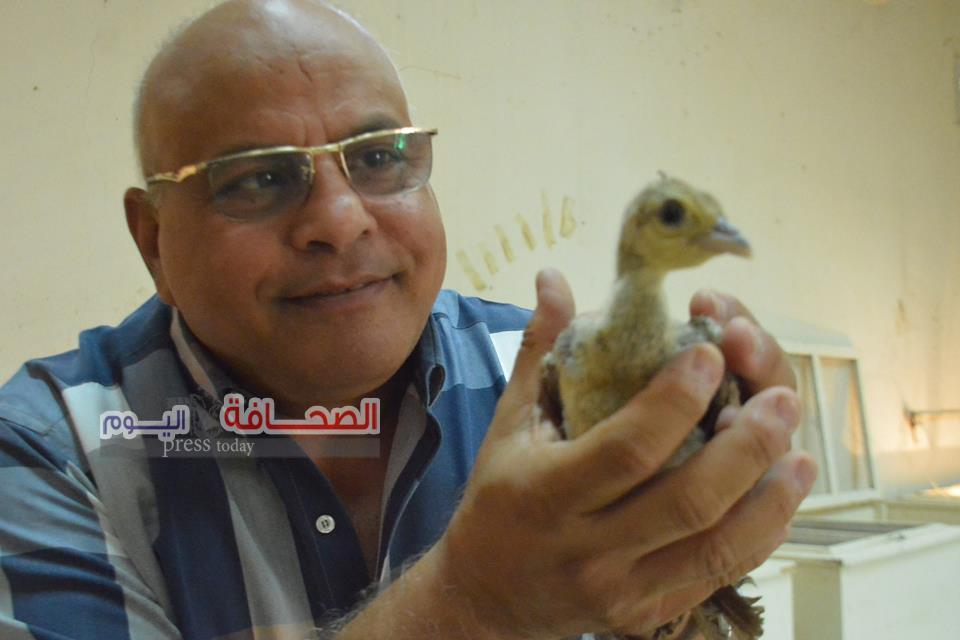 د. رجائى :تفريخ بيض جميع سلالات الطيور البرية  بحديقة حيوان الجيزة