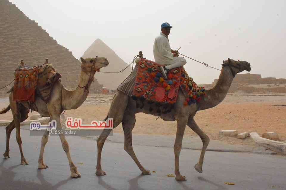 3 آلاف سائح يزورون أهرامات الجيزة رغم العاصفة الرملية