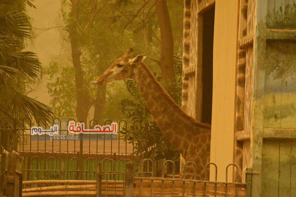 إخلاء حديقة الحيوان بسبب العاصفة الترابية
