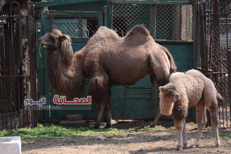 بالصور ..100 ألف زائر لحديقة حيوان الجيزة فى شم النسيم