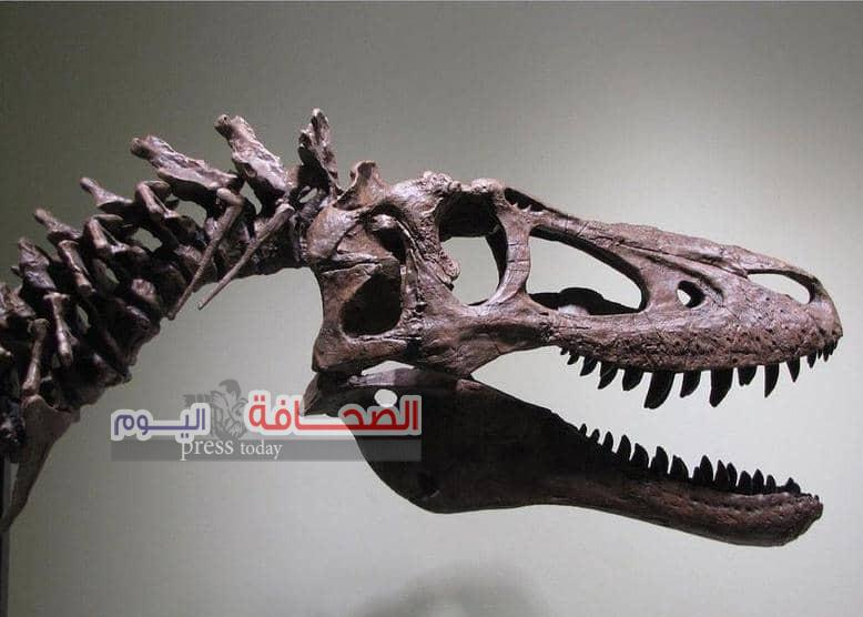""""""" هيكل ديناصور للبيع """"يعود عمرها إلى 68 مليون سنة"""