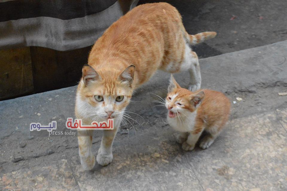 بالصور.. نجاة القطة بسبس وإبنها مشمش ومصرع 9 من آبنائها