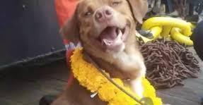 كلب ينجح فى إنقاذ صديقه الذى دفن حيآ