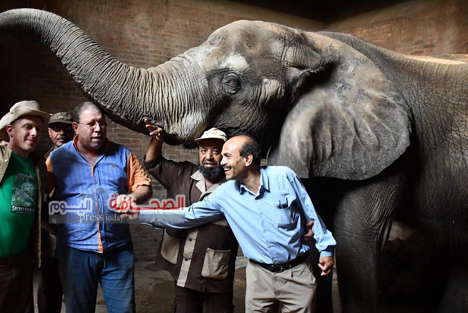 بالصور ..خبير ألمانى يشيد بذكاء أنثى الفيل نعيمة
