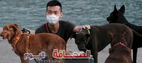 الصين تصدر  قراراً بمنع أكل الكلاب مجددآ بسبب تفشى جائحة كورونا