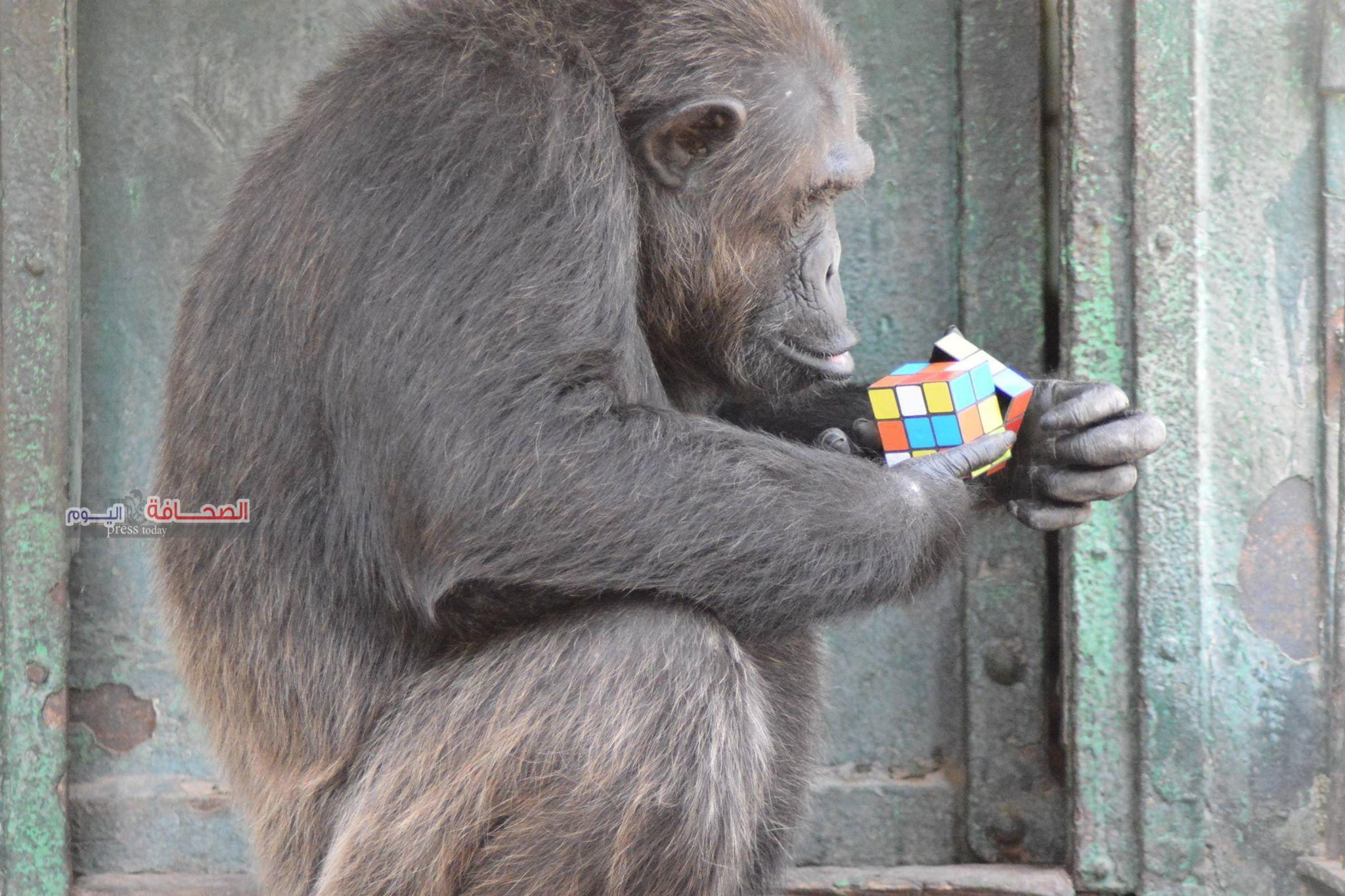 بالصور.. حديقة الحيوان بدون زوار فى العيد بسبب كورونا