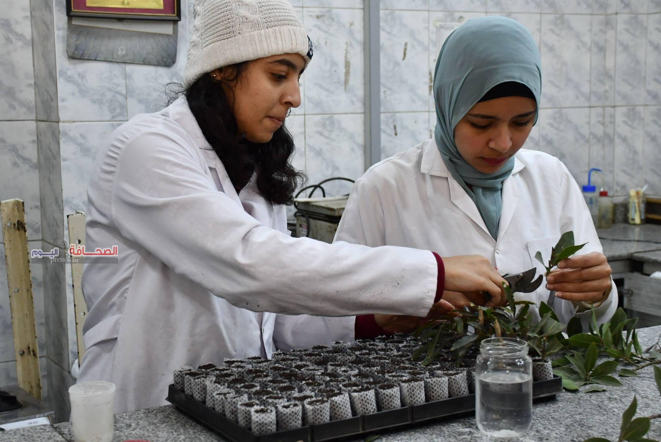 بالصور .. تدريب أوائل كلية الزراعة على أحدث أساليب زراعة أنسجة نباتات الزينة