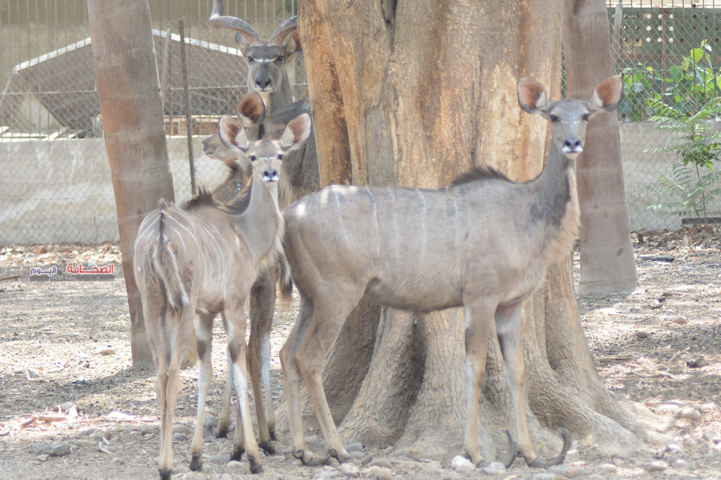 بالصور .. خبراء البيئة يحتفلون باليوم العالمى للحياة البرية بحديقة حيوان الجيزة