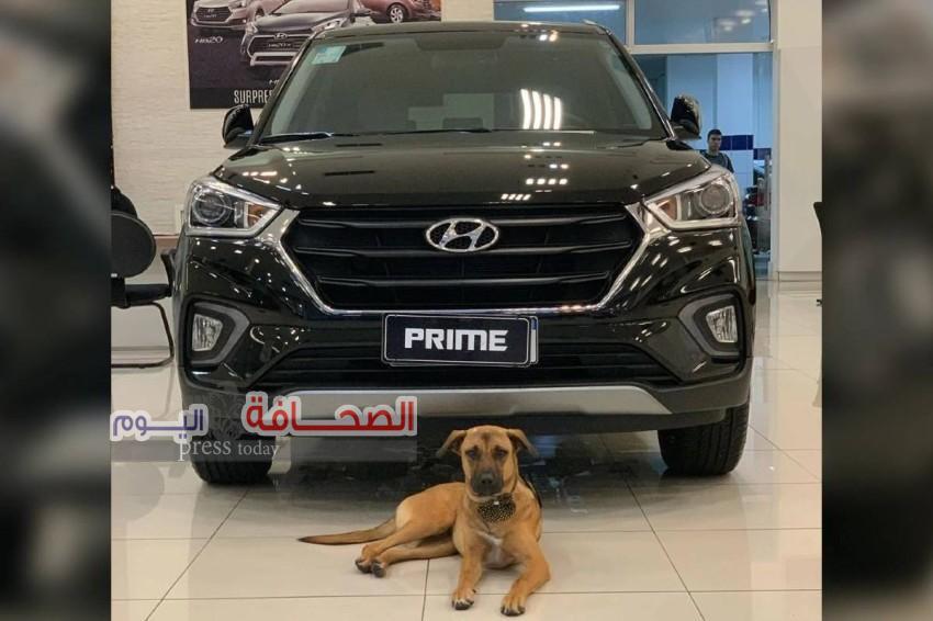 """تعرف على : قصة الكلب """"برايم """"أشهر بائع لسيارات هيونداى ولديه قناة خاصة"""